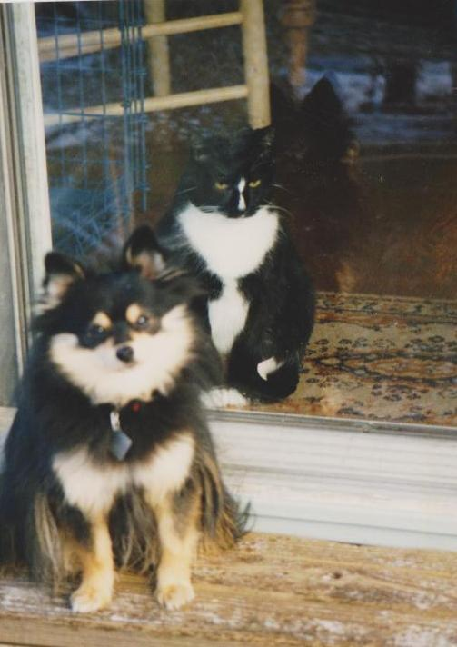 My old dog Max and cat Snizzy, both passed over the rainbow bridge