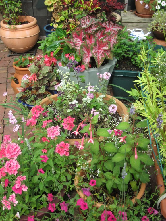More petunias in pots.