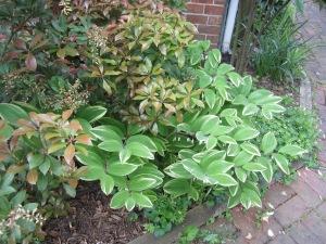 garden pots 2013 002