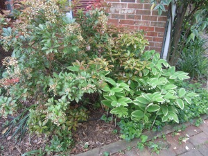 garden pots 2013 003
