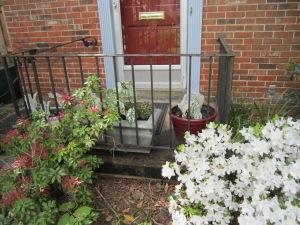 garden pots 2013 004