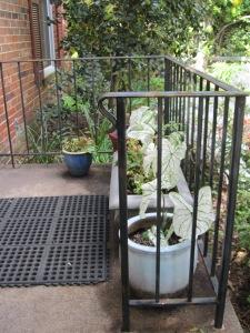 garden pots 2013 006