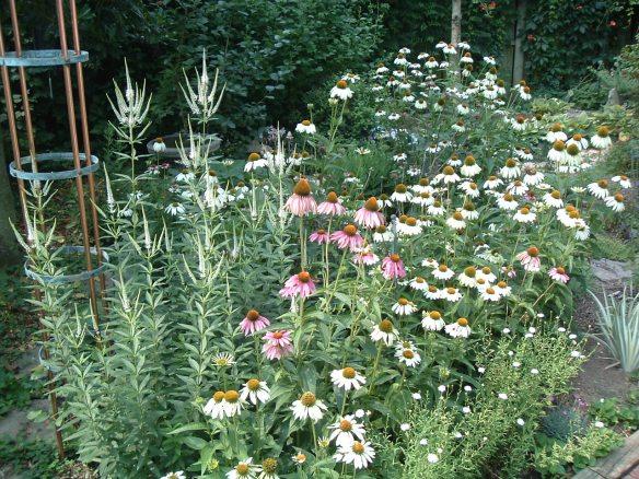 My garden in July