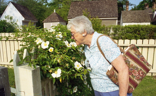Aunt Marge, sniffing old roses in Williamsburg, VA