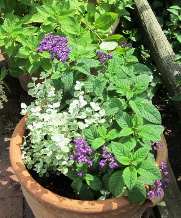 garden 11jluy13 002