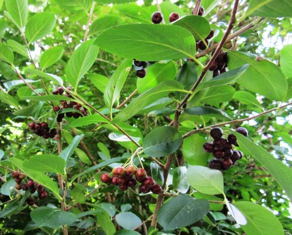 garden 11jluy13 007A