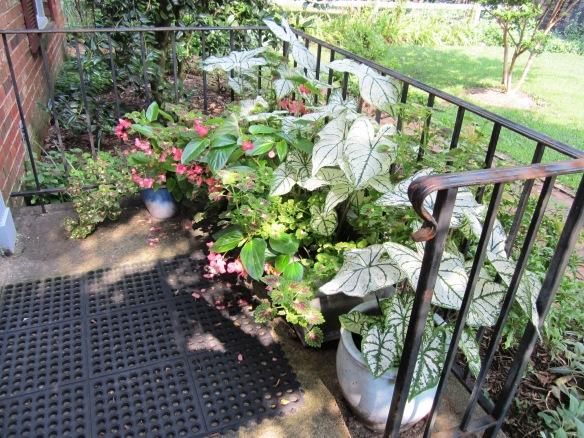 garden 11jluy13 015A