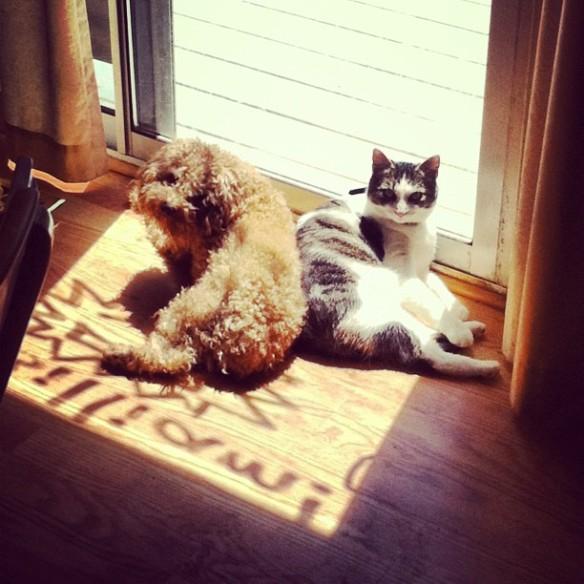 Hannah's dog Ezekiel and Rita's cat