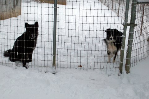 Skye and Starr in their pen