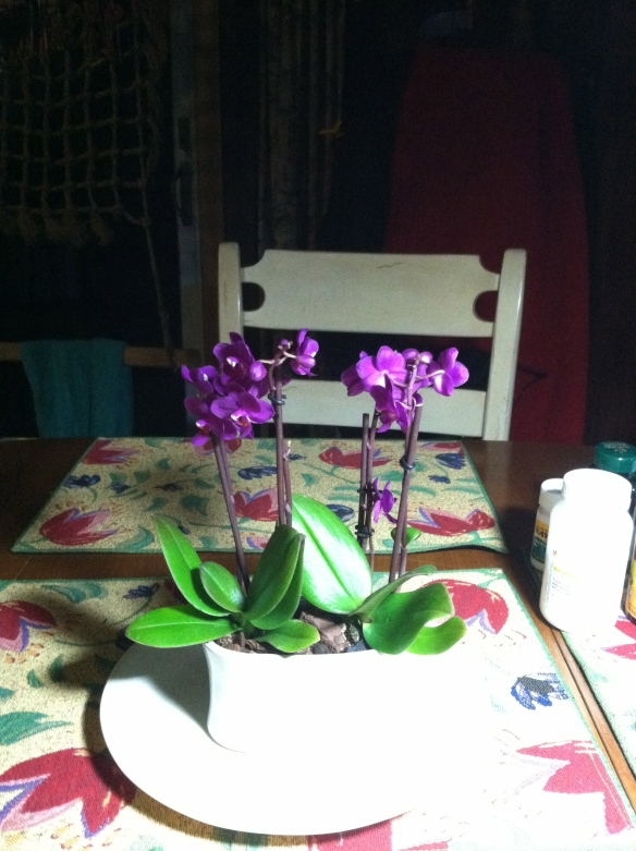 My Moth Orchid early this morning.