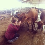 Granddaughter Joy and her cows