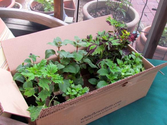 Fuchsia, Begonias,Petunias, Coleus, Oh My!