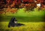 A wolf enjoys the sun.