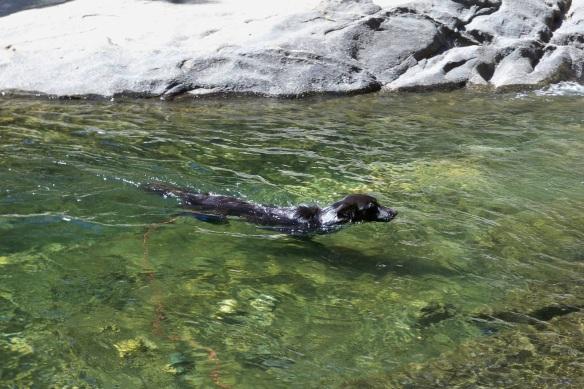 She swims like a fish