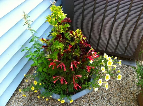 Next to the heat pump: Callibrochoa, Petunias, Fuchsia, Agastache, Coleus. June 2014.