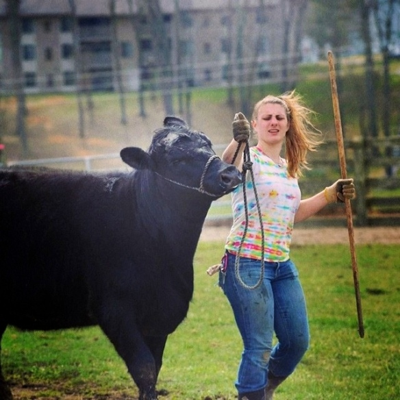 Joy with one of her cattle.
