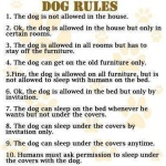 For my dog pals