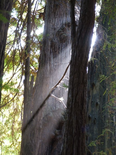 Muir Woods, National Monument