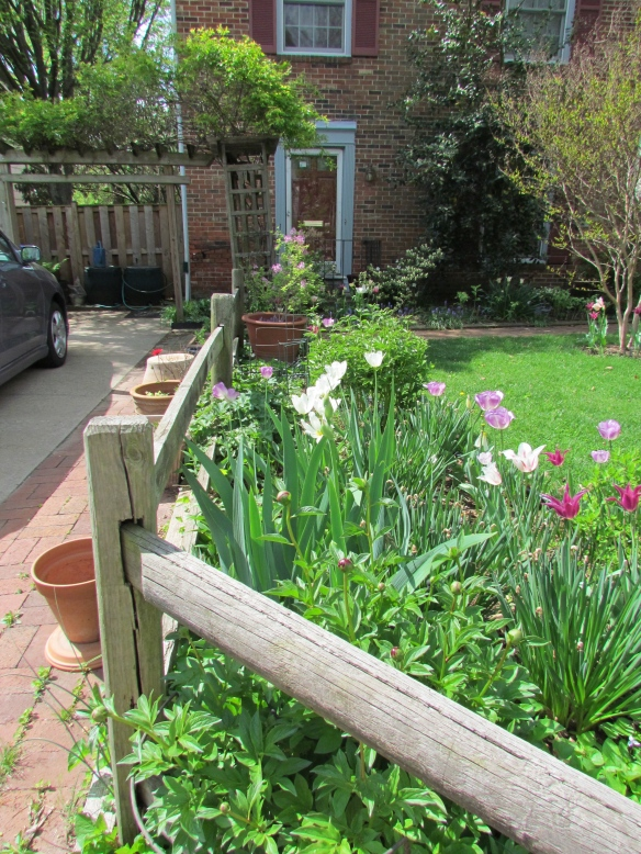 My fence in happier times.