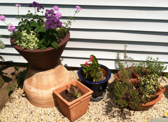 Heliotrope, Heliocrysum, Verbena in large pot; Succulent in the smaller pot; herbs in mixed pot right.