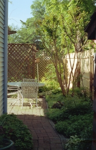 Side yard after we installed the drainage system, 1987